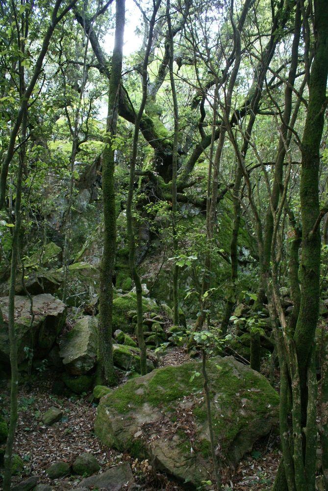 Forêt de Bonifatu