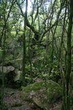 Forêt de Bonifatu - © Kalysteo.com