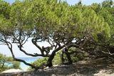Arrivée à la plage de la Saleccia - © Kalysteo.com