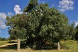 Images/Photos Site préhistorique de Filitosa