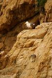 Un goéland et son petit - © Kalysteo.com