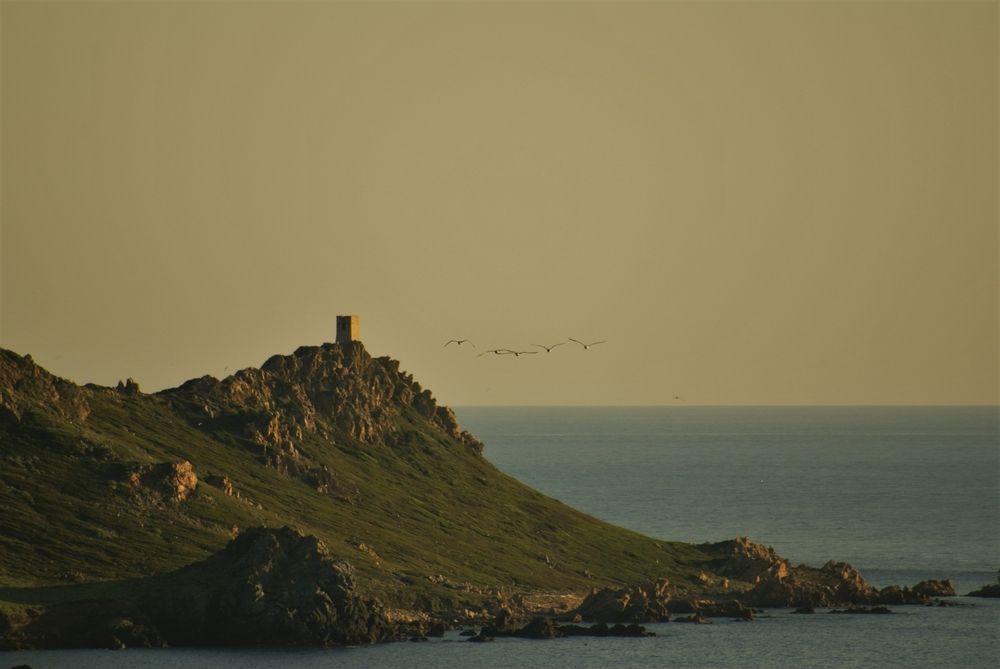 Tour de Castellucio, sur l'île principale