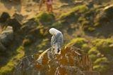 Un goéland - © Kalysteo.com