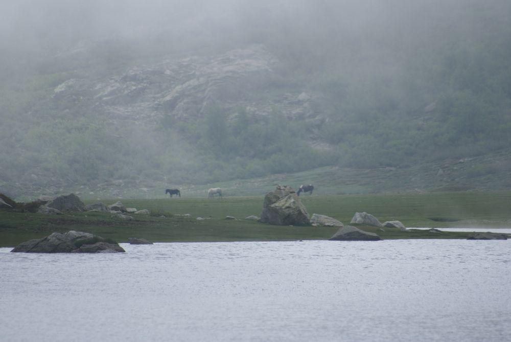 Chevaux près du lac de Nino