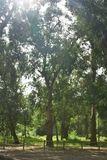 Forêt d'eucalyptus - © Kalysteo.com
